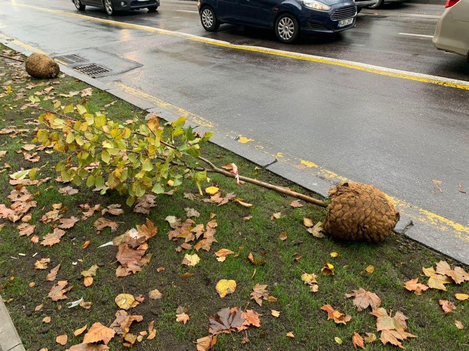 На улицах Пушкина и Бэнулеску-Бодони высадят более 200 деревьев