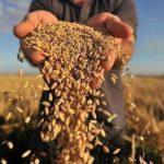 Кику: В декабре сельхозпроизводители получат финансовую помощь