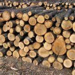 В Молдове выросли цены на дрова