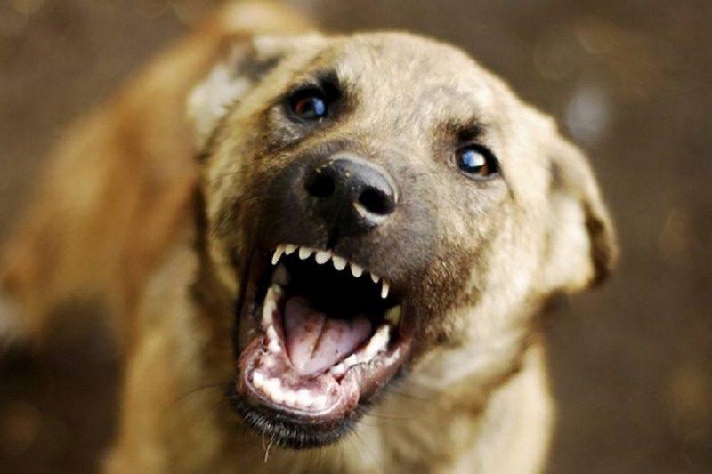 Два новых случая бешенства у животных зарегистрированы в Молдове
