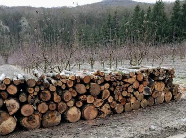 """Власти изучат обстоятельства вырубки деревьев в заповеднике """"Plaiul Fagului"""""""