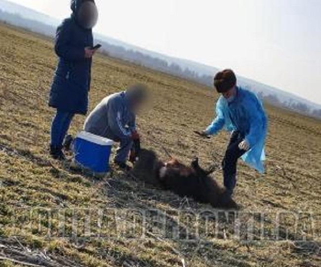 Занялись браконьерством под носом у полиции: в приграничной зоне поймали группу охотников