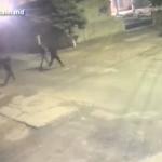 Избили и ограбили прохожего: в столице задержали троих злоумышленников (ВИДЕО)