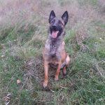 Служебная собака пограничников помогла найти запрещённые вещества