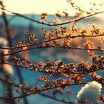 В субботу и воскресенье в Молдове несколько потеплеет, а в начале следующей неделе снова прогнозируют осадки