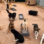 Две ветклиники займутся стерилизацией и вакцинацией бездомных собак в Кишинёве