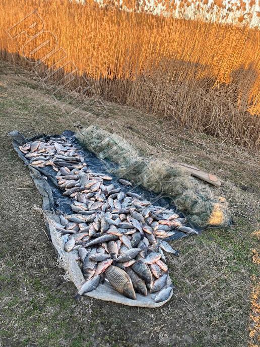 Пограничный инцидент: двое рыбаков-нарушителей получили штрафы