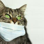 ВОЗ предупредила о возможности передачи COVID-19 от человека к животным