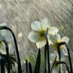 В конце недели в Молдове будет прохладная и дождливая погода