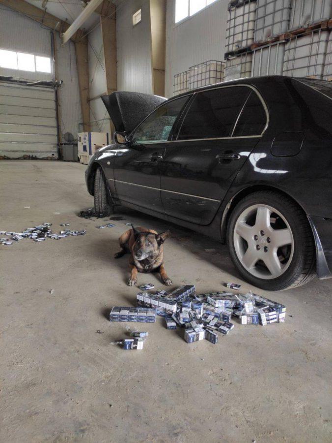 Служебная собака помогла найти контрабандные сигареты в авто (ВИДЕО)