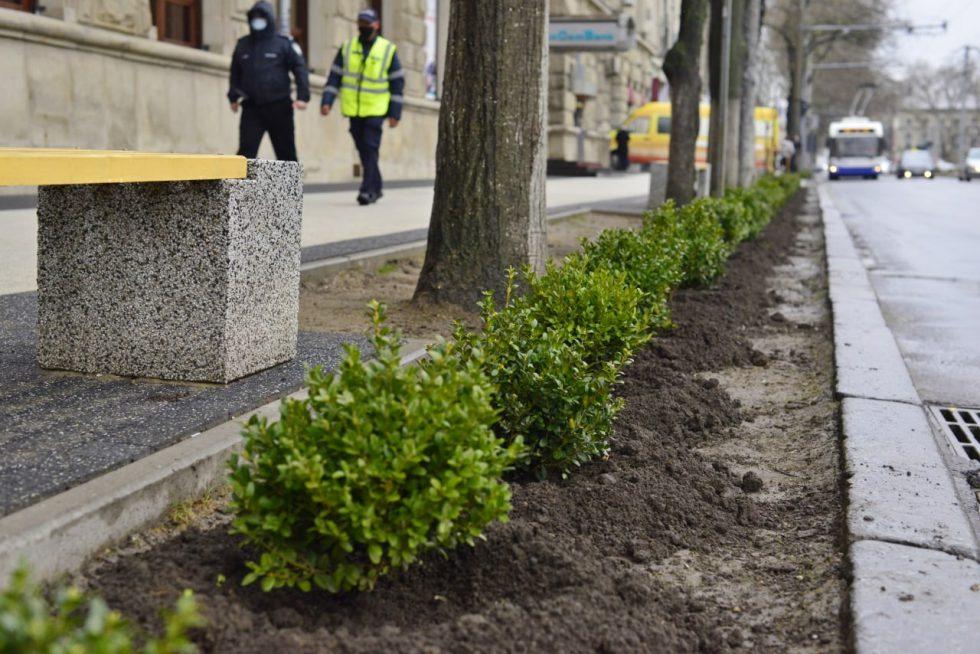 Новая помеха для любителей парковки на тротуарах: на улице Пушкина высадили кусты самшита