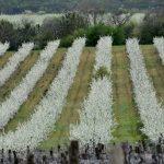 Молдова глазами Взорова. Весна 2021. Поля сады