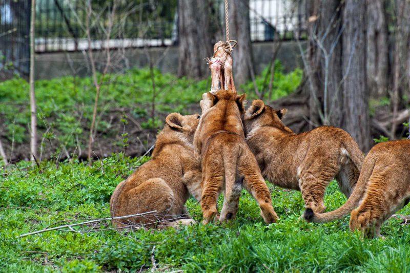 Львиная доля домыслов