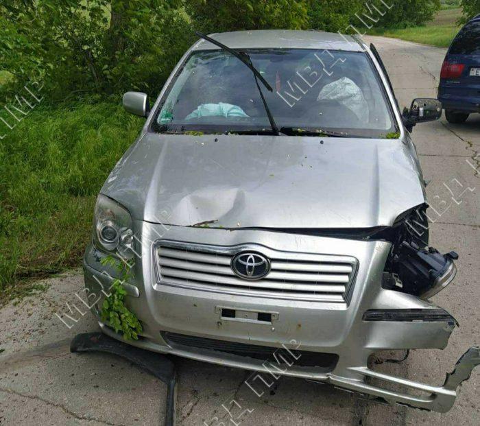 Выскочивший на дорогу заяц стал причиной ДТП: машина врезалась в дерево