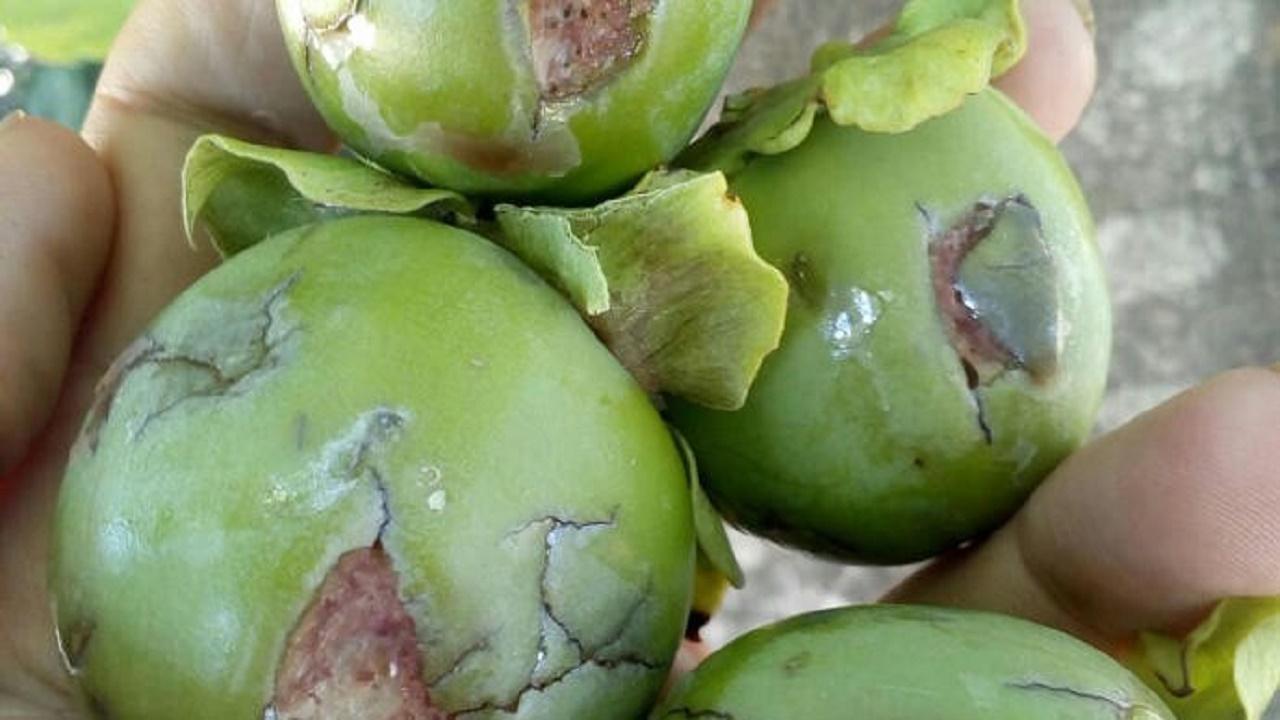 Правительство должно помочь аграриям, – Додон (ВИДЕО)