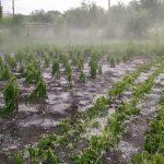 ГИЧС: сильный дождь нанёс урон сотням гектаров садов и посевов