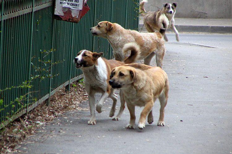В трёх секторах столицы начинается отлов бездомных животных