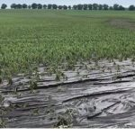 Размытые дороги и затопленные поля: спасатели продолжают устранять последствия непогоды