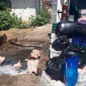 Инспекторы НАБПП выявили у агента более 1,5 тонн мяса с сальмонеллой