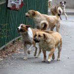 С начала лета в Кишинёве стерилизовали более 250 бездомных собак