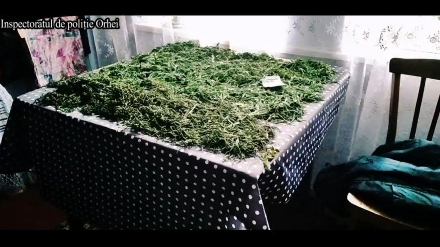 Житель Оргеева выращивал в огороде коноплю