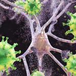 Американские учёные выявили «сверхчеловеческий» иммунитет против коронавируса