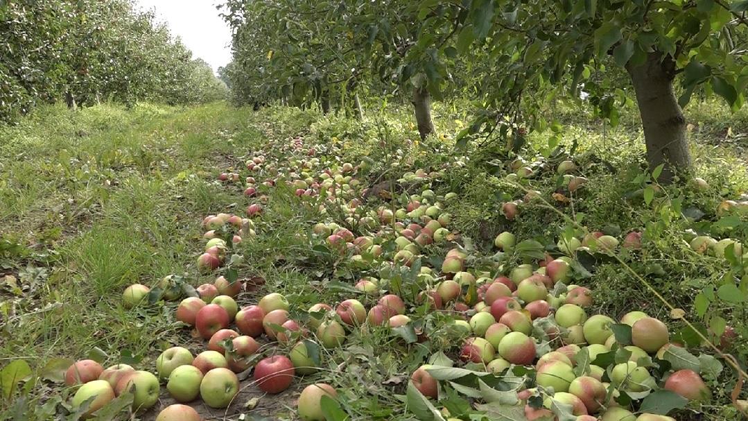 Урожай есть, рынка сбыта – нет: фермеры на грани отчаяния (ВИДЕО)