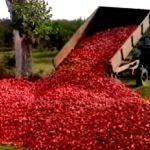 Чебан: Выбрасывать яблоки наших фермеров недопустимо, фрукты должны попасть на стол детям