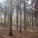 Гражданин Молдовы был убит во Франции: его труп нашли в лесу